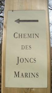 Chemin-des-joncs-marins